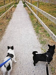 bella Lily path