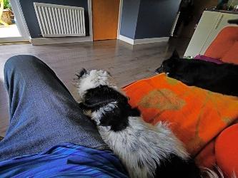 bella lily sofa me