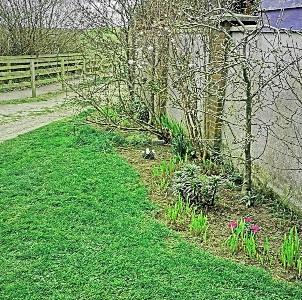 side garden x